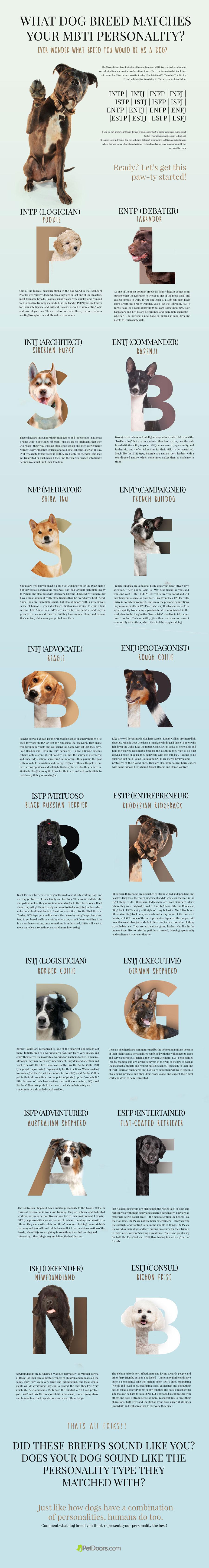 What Dog Breed Matches Your MBTI Personality